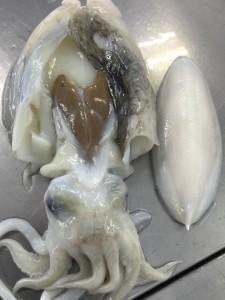 墨イカの骨1