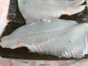 マトウ鯛2